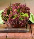 Fresh organic purple lettuce Stock Photo