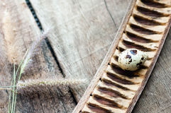 Fresh organic quail egg on wooden background.  Stock Photo