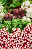 Fresh organic radish and beet-root on farmers market Royalty Free Stock Images