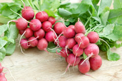 Fresh organic radish, bunch of red radishes on table Royalty Free Stock Photos