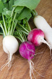 Fresh organic radish crop harvested closeup Stock Image