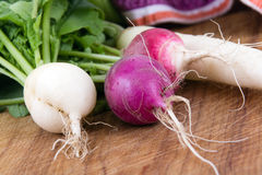 Fresh organic radish crop harvested closeup Stock Images