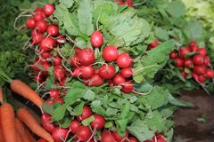 Fresh organic Radish on Farmers Market stock photo