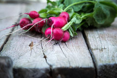 Fresh organic radish on a old wooden background. Radishes with tops Stock Image
