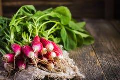 Fresh organic radish on wooden  background Royalty Free Stock Image