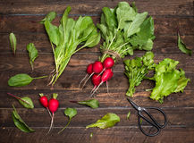 Fresh organic radishes and greens herbs just from the garden on. Rustic wooden background Stock Photo