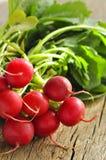 Fresh organic radishes with leaves. Bundle of fresh organic radishes with leaves Royalty Free Stock Photography