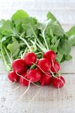 Fresh organic radishes on a white wooden table royalty free stock image