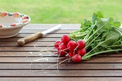 Fresh organic radishes ready to be cut for salad on a wooden table royalty free stock photography