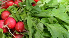 Fresh organic radishes  for sale in a market. Picture of a Fresh organic radishes  for sale in a market Royalty Free Stock Photo