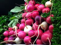 Fresh Organic Radishes Stock Photo