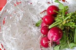 Fresh organic radishes in white wooden basket. Summer vegetables Stock Photos
