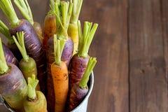 Fresh organic rainbow carrots Royalty Free Stock Photo
