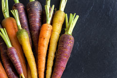 Fresh organic rainbow carrots Stock Images