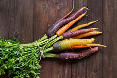 Fresh organic rainbow carrots Royalty Free Stock Images