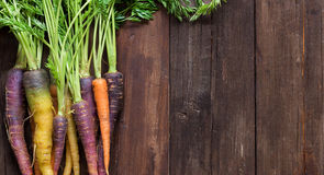 Fresh organic rainbow carrots Royalty Free Stock Image