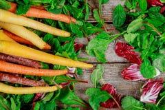Fresh organic rainbow carrots on fresh lettuce on wooden background. Fresh organic rainbow carrots and a fresh salad leaves on wooden background lettuce healthy stock photo