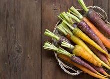 Fresh organic rainbow carrots Stock Image