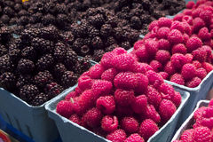 Fresh organic rasberries in Vancouver's Grandville Island Market Royalty Free Stock Photography