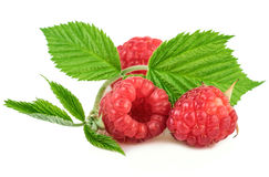 Fresh organic raspberries with leaves on white. Background Royalty Free Stock Images