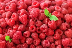 Fresh organic raspberries with mint leaves. Fruit background with copy space. Summer and berries harvest concept. Vegan. Vegetarian, raw food Stock Images