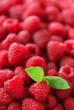 Fresh organic raspberries with mint leaves. Fruit background with copy space. Summer and berries harvest concept. Vegan. Vegetarian, raw food Stock Image