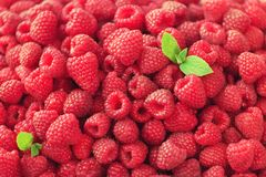 Fresh organic raspberries with mint leaves. Fruit background with copy space. Sunny summer and berries harvest concept. Vegan, vegetarian, raw food Royalty Free Stock Images