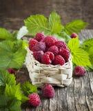 Fresh organic raspberry in basket. Stock Image