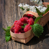 Fresh organic raspberry in basket. Stock Photography