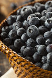 Fresh Organic Raw Blueberries. In a Basket Royalty Free Stock Photo