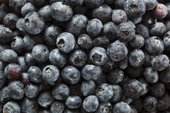 Fresh Organic Raw Blueberries. In a Basket Royalty Free Stock Photography