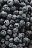 Fresh Organic Raw Blueberries. In a Basket Royalty Free Stock Images