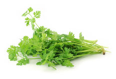 Fresh organic raw coriander leaf Royalty Free Stock Photo