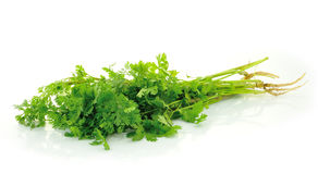 Fresh organic raw coriander leaf Royalty Free Stock Images