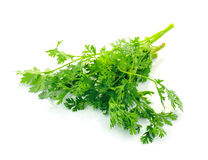 Fresh organic raw coriander leaf Stock Images