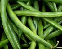 Fresh organic raw green beans. Like art background, texture Royalty Free Stock Images
