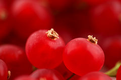 Fresh organic red currants on a white ceramic surface stock photography