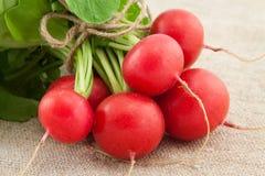 Free Fresh Organic Red Radish Royalty Free Stock Photos - 39467378