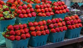 Fresh, organic red strawberries Royalty Free Stock Photos
