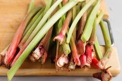 Fresh organic rhubarb Stock Image