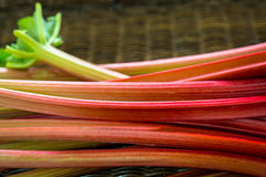 Fresh organic rhubarb Royalty Free Stock Image
