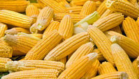 Fresh Organic Ripe Corns At A Street Market Stock Photography