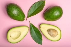 Fresh organic ripe green whole and sliced Fuerte avocado with le. Aves, copy space close up  on trendy pink background Royalty Free Stock Photography