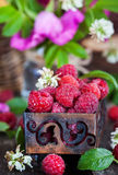 Fresh organic ripe raspberry in a box Royalty Free Stock Photography