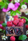 Fresh organic ripe raspberry in a box Royalty Free Stock Images