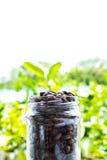Fresh organic roasted coffee beans Royalty Free Stock Image