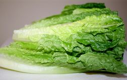 Fresh Organic Romaine Lettuce Leaves Royalty Free Stock Image
