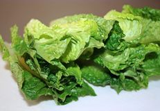 Fresh Organic Romaine Lettuce Leaves on cutting board Stock Image
