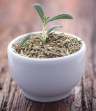 Fresh organic rosemary. On a wooden surface Royalty Free Stock Image