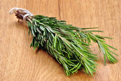 fresh organic rosemary from the garden Stock Images